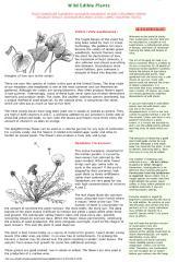 wild edible plants.pdf