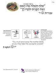 copywork parshas ki seitzei 2.pdf